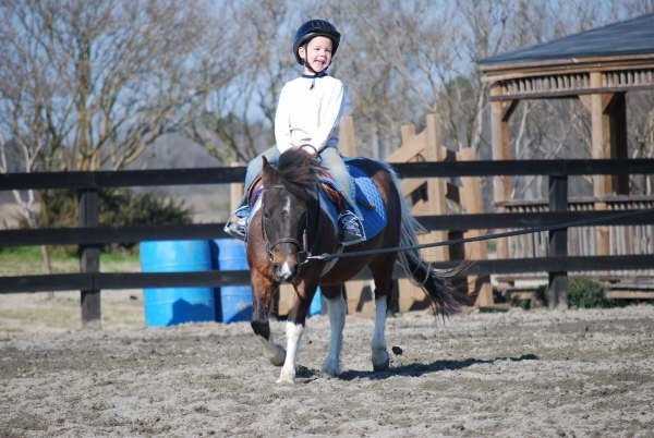 horse riding lessons. Horseback Riding Lessons at