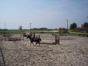 Jump Course at Double D 300x225 Horseback Riding