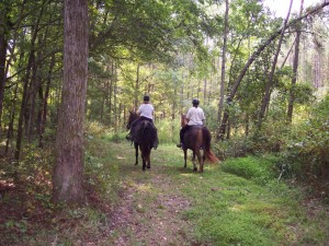 Trail Rides at Double D 300x225 Horseback Riding